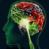 Продукты улучшающие работу мозга